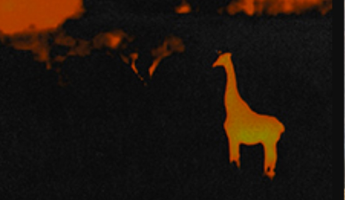 Thermal Image of animals